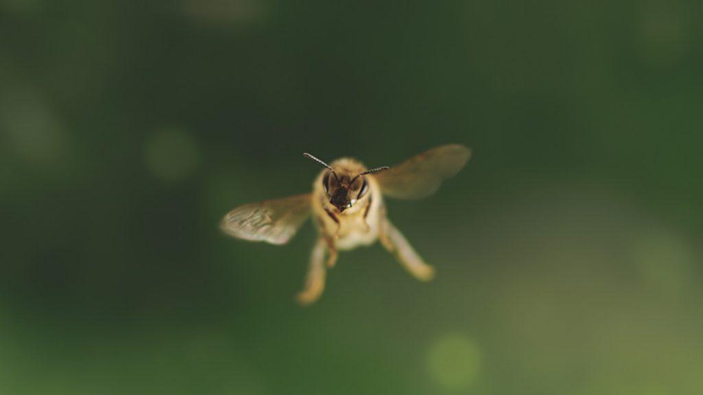 Tagebuch einer Biene © Rudolf Diesel