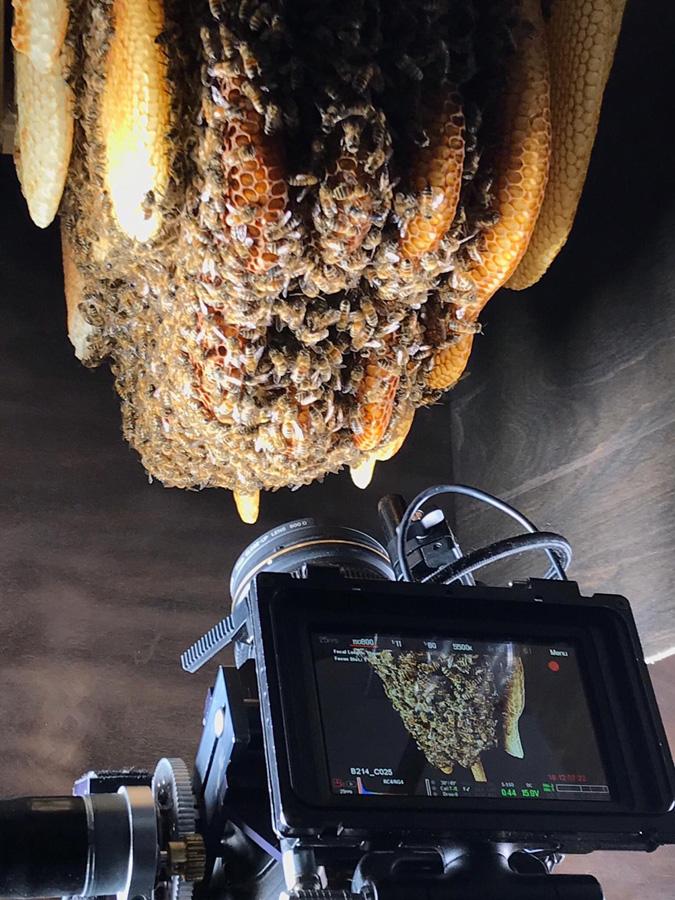 Tagebuch einer Biene © Miriam Zimmermann