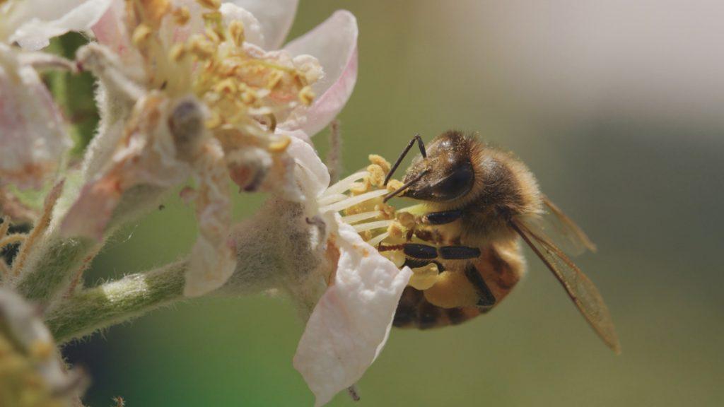 Tagebuch einer Biene © Brian McClatchy